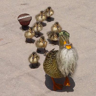 DuckDynasty_R02a